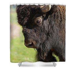 Yellowstone Bison Portrait Shower Curtain by Sandra Bronstein