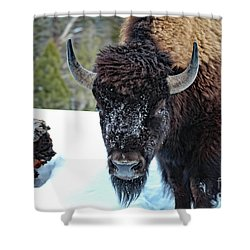 Yellowstone Buffalo Stare-down Shower Curtain
