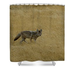Shower Curtain featuring the photograph Yellowstone Coyote by Sue Smith