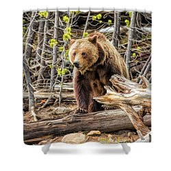 Shower Curtain featuring the painting Yellowstone Grizzly Bear by Christopher Arndt