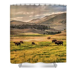 Shower Curtain featuring the painting Yellowstone National Park Lamar Valley Bison Grazing by Christopher Arndt