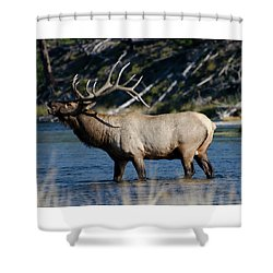 Yellowstone Park Elk Shower Curtain