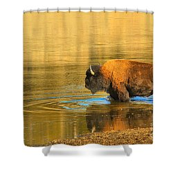 Shower Curtain featuring the photograph Yellowstone Solo Swimmer by Adam Jewell