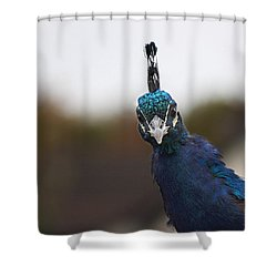 Yes? Shower Curtain