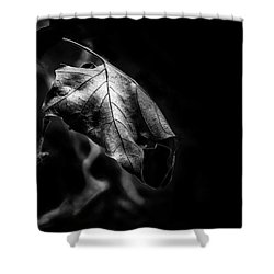 Yet Beauty Will Move On Shower Curtain
