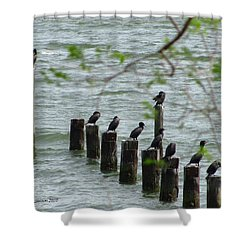 York River Cormorants Shower Curtain