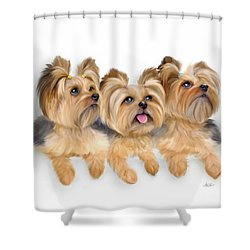 Yorkie Trio Shower Curtain