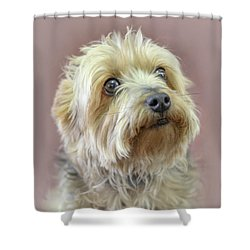 Shower Curtain featuring the photograph Yorkshire Terrier by Marion Johnson