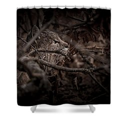 Yosemite Bobcat  Shower Curtain