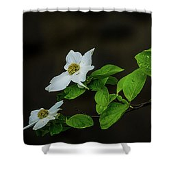 Yosemite Dogwoods Shower Curtain