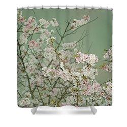 Yoshino Cherries Jade Shower Curtain