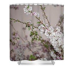 Yoshino Cherries Lavender Shower Curtain