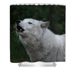You Are My Moonshine Shower Curtain by William Fields