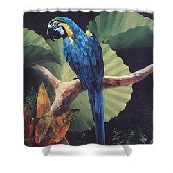 You Don't Say Shower Curtain