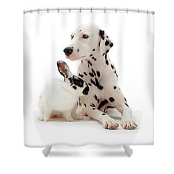 You Knocked My Spots Off Shower Curtain