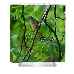 You Looking At Me Shower Curtain by David Lane