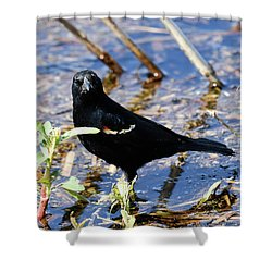 You Looking At Me Shower Curtain by Gary Wightman