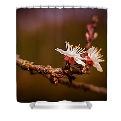 You Make Me Blossom Shower Curtain by Tim Nichols