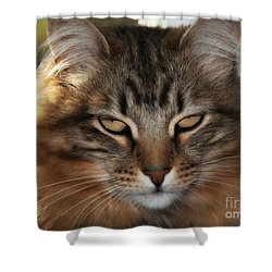 You Think Shower Curtain
