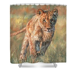 Shower Curtain featuring the painting Youn Lion by David Stribbling