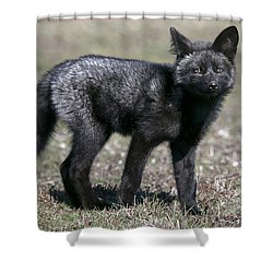 Curious Shower Curtain by Elvira Butler