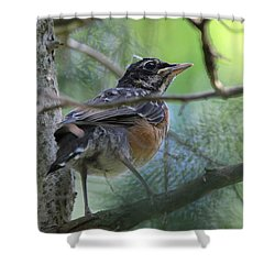 Young American Robin Setauket New York Shower Curtain by Bob Savage