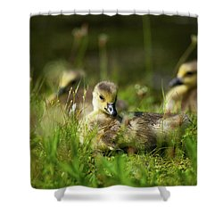 Shower Curtain featuring the photograph Young And Adorable by Karol Livote