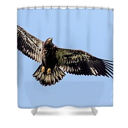 Young Bald Eagle Flight Shower Curtain by Eleanor Abramson
