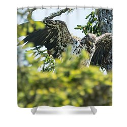 Young Bald Eagle Shower Curtain