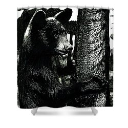 Young Black Bear In Tree  Shower Curtain