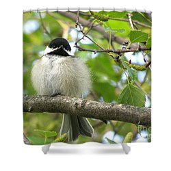 Young Black-capped Chickadee Shower Curtain by Angie Rea