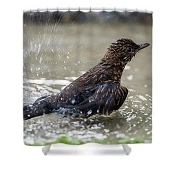 Shower Curtain featuring the photograph Young Blackbird's Bath by Torbjorn Swenelius