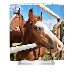 Young Blue Eyed Horse Shower Curtain