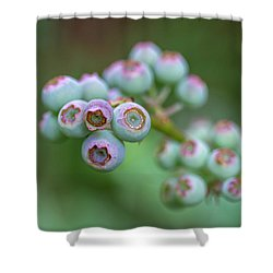 Young Blueberries Shower Curtain