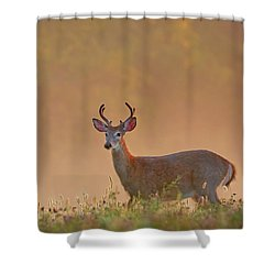 Young Buck Square Shower Curtain