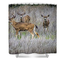 Young Bucks Shower Curtain