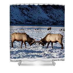 Young Bull Elk In Jackson  Hole In Wyoming Shower Curtain