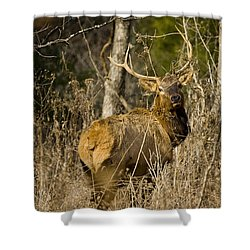 Shower Curtain featuring the photograph Young Bull On A Woodland Trail by Michael Dougherty