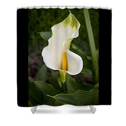 Young Calla Lily Shower Curtain