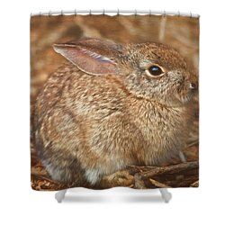 Young Cottontail In The Morning Shower Curtain