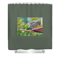Young Crossbill Female  August  Indiana Shower Curtain by Rory Cubel