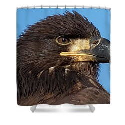 Young Eagle Head Shower Curtain