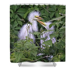 Young Egrets Shower Curtain