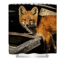 Young Fox In The Wood Shower Curtain