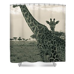 Young Giraffe With Mom In Sepia Shower Curtain by Darcy Michaelchuk