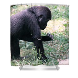 Shower Curtain featuring the photograph Young Gorilla by Laurel Talabere