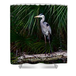 Young Great Blue Heron Shower Curtain