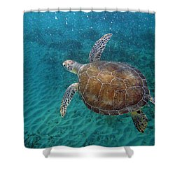 Young Green Turtle Shower Curtain by Kimberly Mohlenhoff