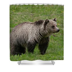 Young Grizzly Shower Curtain