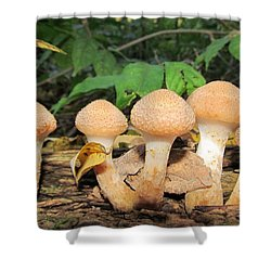 Young Honey Mushrooms Shower Curtain